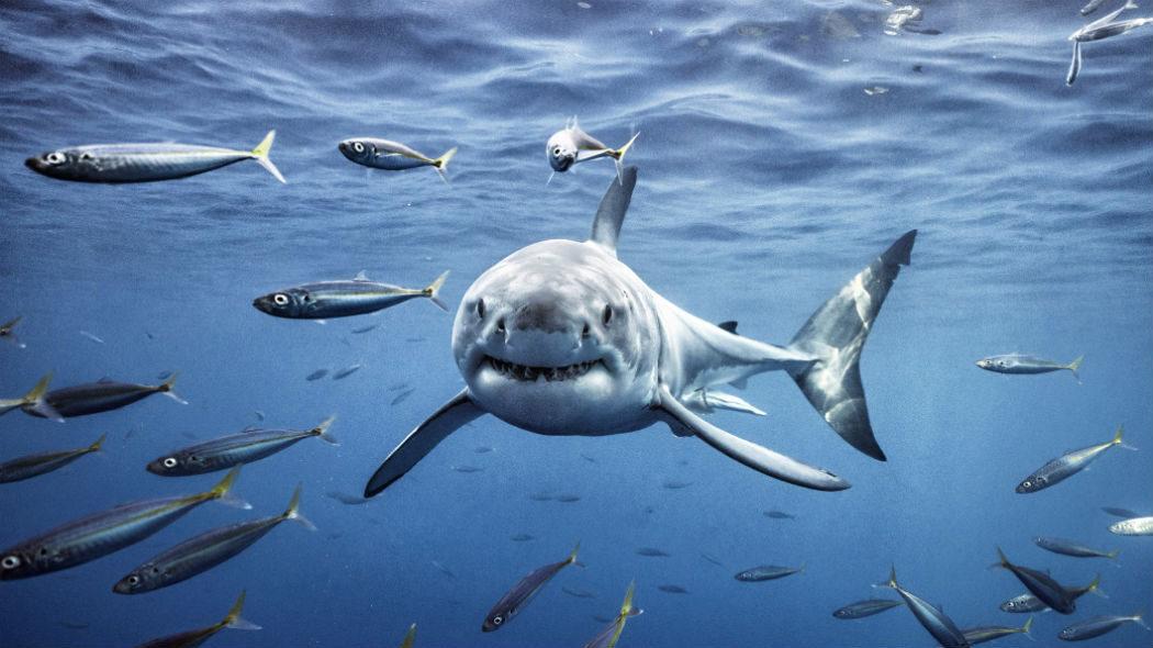 Squali bianchi, predatori marini e leggende